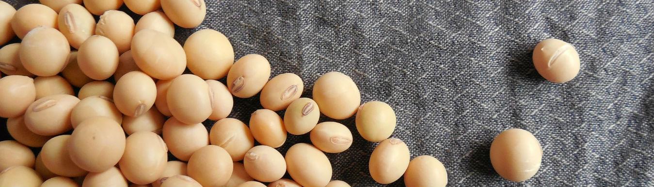 大豆 植物性蛋白
