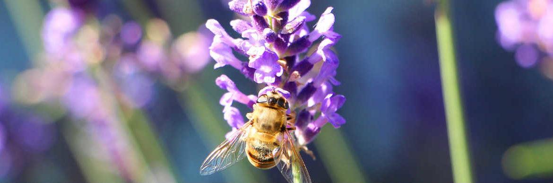 女王蜂與蜂王乳