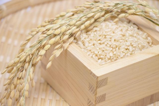 玄米多酚(糙米)